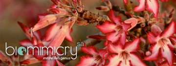 biomimicry-slideshow-003