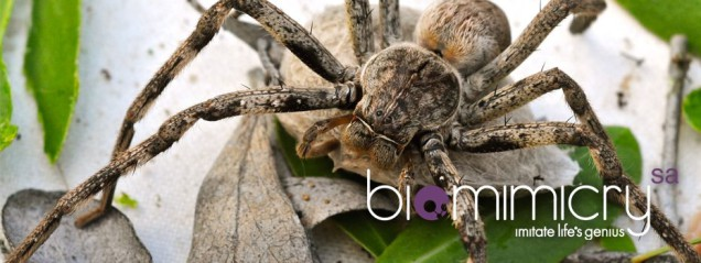 biomimicry-slideshow-005